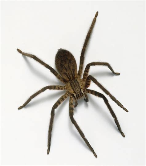 Garden Spider With White Back Fear Of Spiders Here S How To Overcome Your Arachnophobia