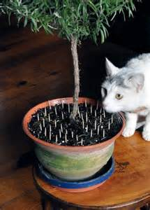 take care mixing cats and houseplants lubbock online