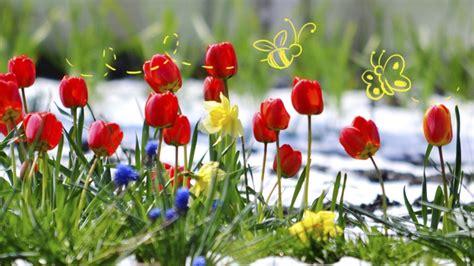 Fleurs De Printemps by Quelle Fleur Du Printemps Es Tu