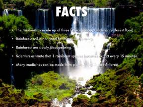 Facts About The Rainforest Floor Carpet Vidalondon