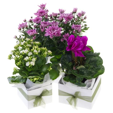 small house plants small flowering house plant bays flowers