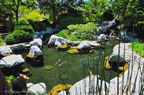 San Diego Pond And Garden by January 31st 2015 San Diego Photo Journal Japanese F
