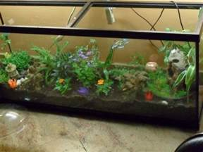 fish tank terrarium submited images pic2fly