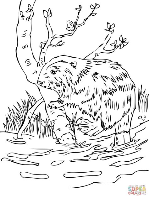 printable version of html page click the rabbits and beaver coloring pages to view