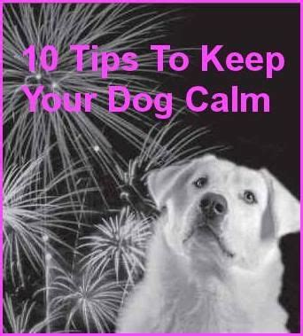 calming dogs during fireworks 10 tips to keep your calm during fireworks this 4th of july day trading pets