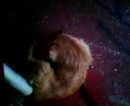 animales foyando a viejas perros animales follando abuelas