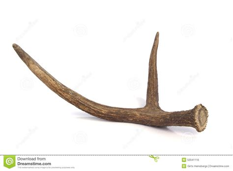 Horn White white horn elephant tusk white crescent with blue