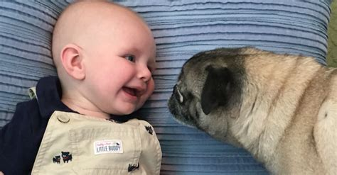 how to introduce a puppy to another baby versus fur baby how to introduce your to your newborn