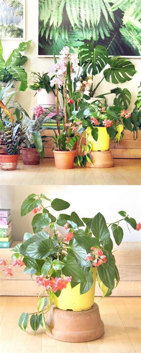 beautiful indoor plants  easy care tips