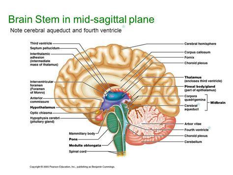 Similiar Mid Sagittal Brain Diagram Color Coded Keywords