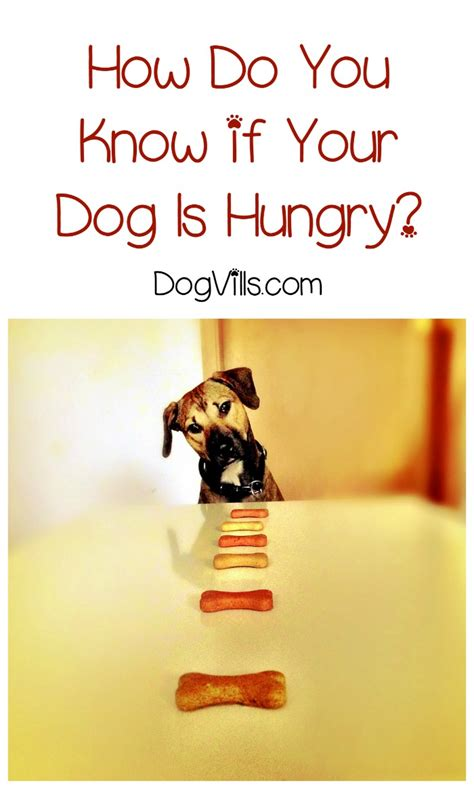 how do you a puppy how do you if your is hungry dogvills