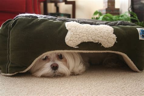 hiding under bed 15 dogs who are terrible at hide and seek