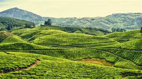 coffee plantation wallpaper beautiful places in kerala pictures unforgettable