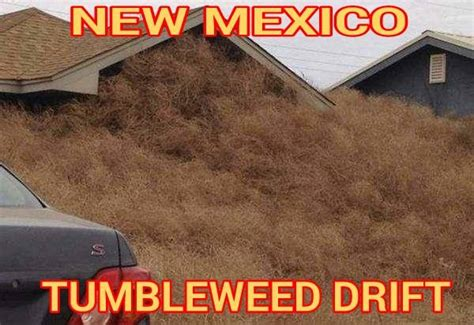 New Home Meme - 12 funny new mexico meme s that only a new mexican would