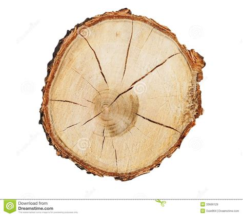 cross section of a tree trunk cross section of tree trunk isolated royalty free stock