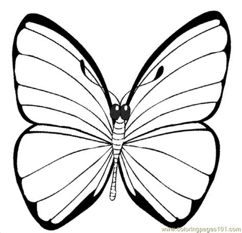 coloring pages of bugs and butterflies coloring pages ying butterfly coloring pages insects