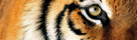 tiger denmark tiger wwf denmark