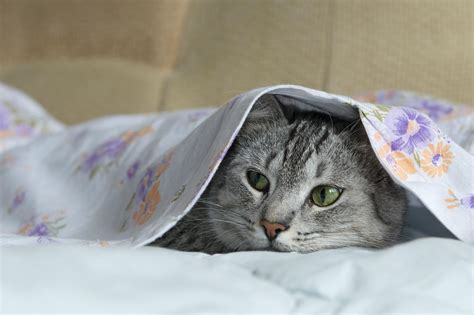cat bed sheets how to get rid of germs on your bed sheets digital trends
