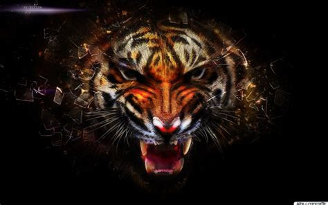 Design Wall Art by Tiger Wallpaper Hd Widescreen Tiger Tier Wallpapers