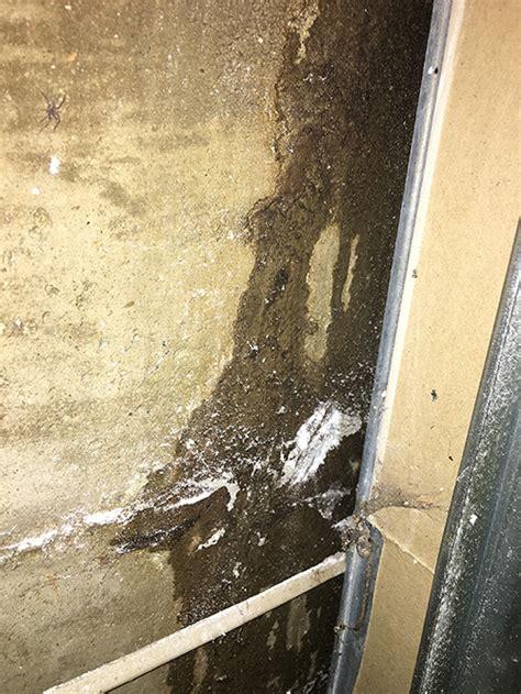 leak leaking inside basement wall home