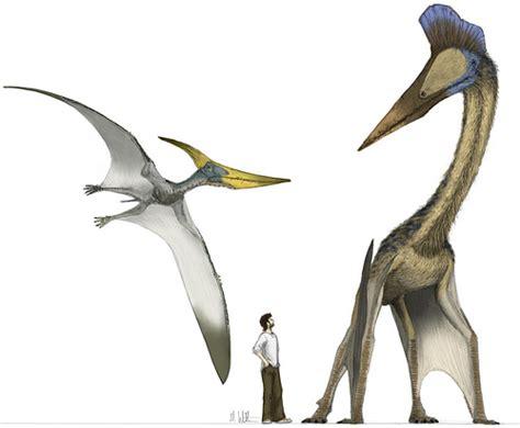 uccelli non volanti alcuni pterosauri rettili volanti preferivano camminare