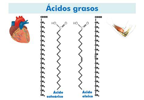 cadenas carbonadas longitud 191 qu 233 son los defectos del metabolismo de la carnitina