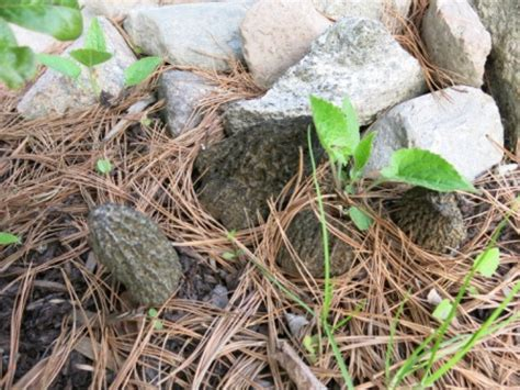Seltsame Pilze Im Garten by Seltsamer Pilz Im Beet