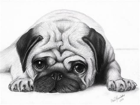 sketch of a pug image gallery pug drawings