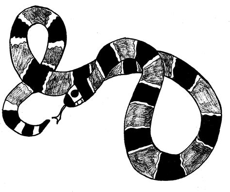 coral snake coloring page download snake coloring pages 3 coloring pages of corn