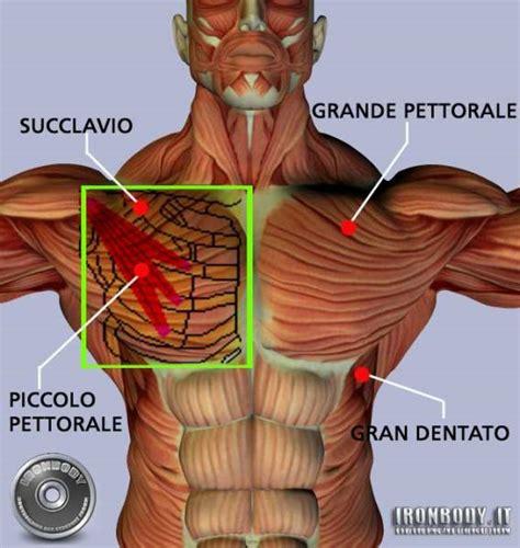 dolore interno spalla destra muscoli torace