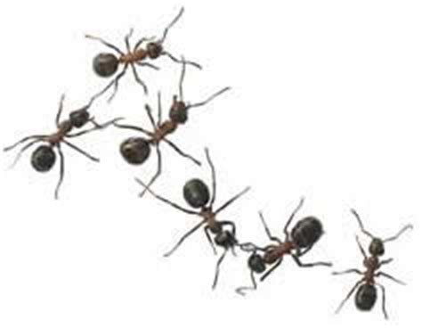 The World Of Our Friends The Ants the world of our friends the ants