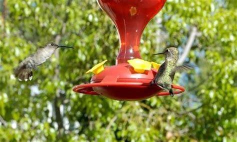 nectar feeders 12 x sunbird hummingbird feeder bulk