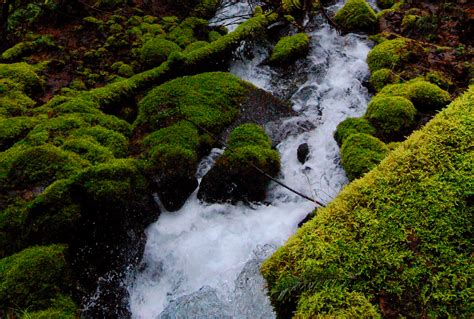 what is a spring nestle s attempt to tap into oregon spring water