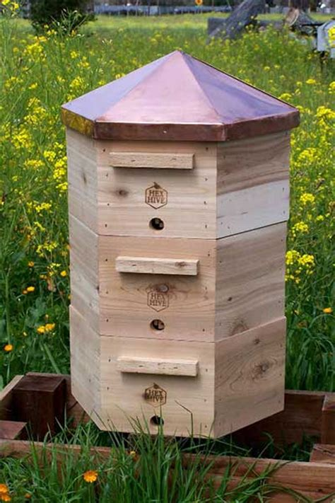 Backyard Honey Bee Hive by Beekeeping In Colorado New Town Ordinance