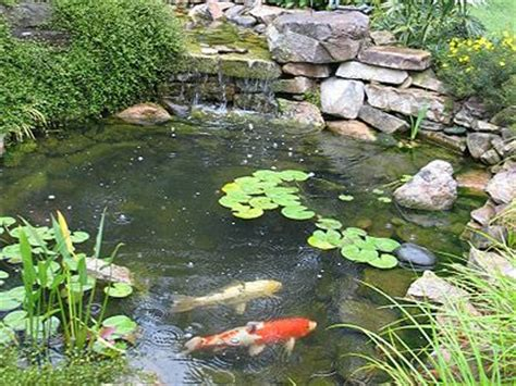 backyard fish pond maintenance gallery triangle pond management water and koi garden