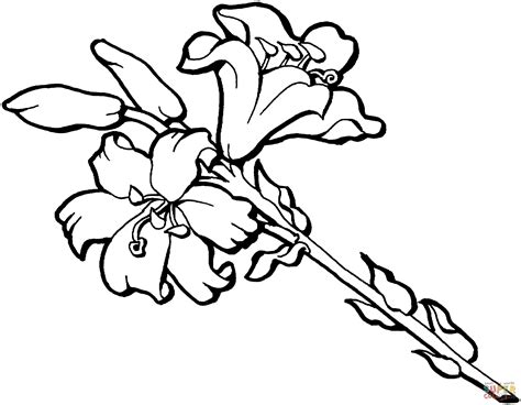 coloring page iris iris flower blossom coloring page free printable