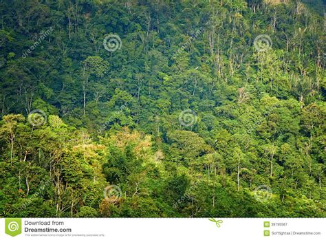 view of forest habitat royalty free stock photograph in forest at stock photo image 39795567
