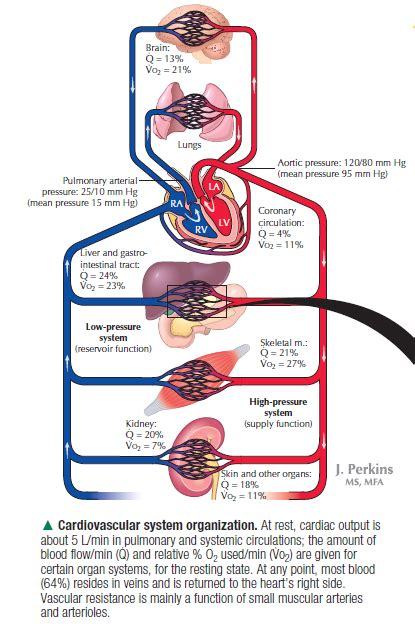 blood flow through the brain diagram physiology vo2 of the brain is 21 of q 13 or of the