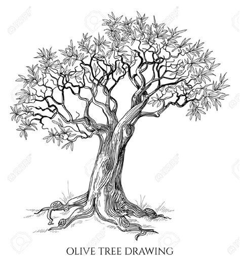 olive tree tattoo 22 best olive tree images on olive olive