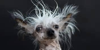 stort galleri er 229 rets grimmeste hunde billeder 229 avisen dk
