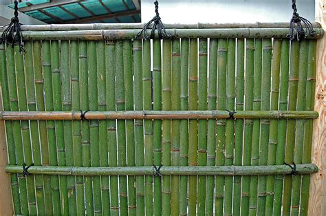 Bambus Pflanzen Sichtschutz 780 by Wuhrmann Garten Ag Japangarten