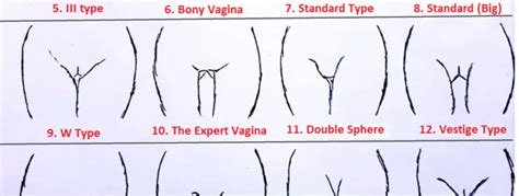 type of vanginal 10 types of vaginas that exist if you have 4 you can