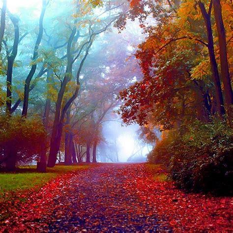 amazing beautiful colorful colourful autumn path pixdaus
