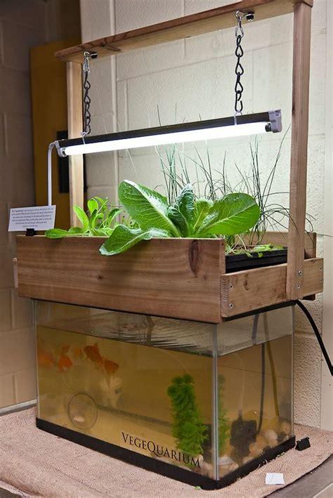 aquaponics garden ideas indoor aquaponics hydroponics