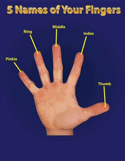 Pdf Index Finger by Big Image Png