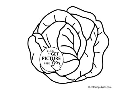 vegetable coloring pages preschool exclusive idea cabbage coloring pages wallpapercraft patch