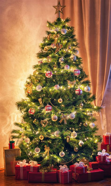 nearby christmas tree italian traditions