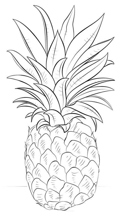 pineapple coloring page pineapple coloring pages to and print for free
