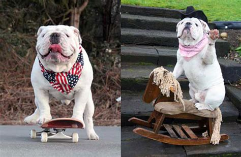 what breed is gabe the gabe the bulldog is the smartest and brightest enjoy those tricks