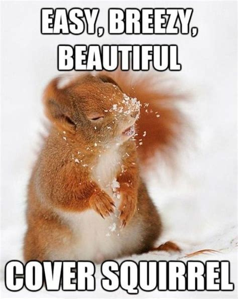 Funny Meme Cover Photos - cover squirrel weknowmemes